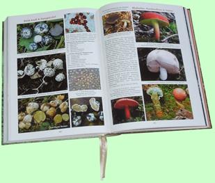 exotische Pilze